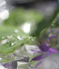 Drop with Purple Flower